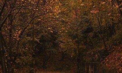 Autumn in love (Albenza) – Eleonora Simonetto
