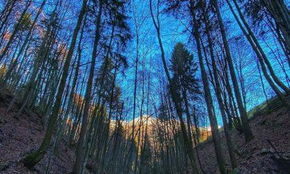 Squarci e scorci nel bosco a Oltre il Colle – Amanda