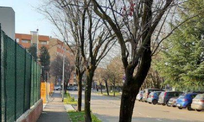 Via Cornagera, peri da frutto al posto delle piante malate