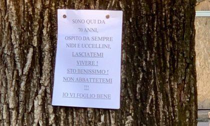 Il grido di aiuto ai cittadini delle piante di Piazza Dante, che adesso parlano anche