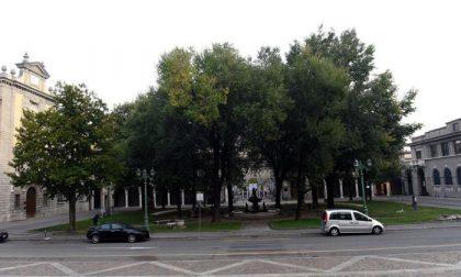 Piazza Dante, il taglio degli alberi finisce in Procura. E oggi camminata di protesta