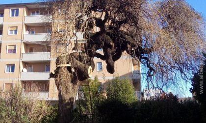 Strano ma vero: c'è anche chi elogia il Comune di Bergamo per la cura delle piante