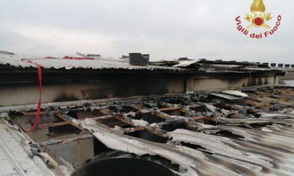 Incendio in un capannone a Torre Pallavicina con all'interno seimila maiali