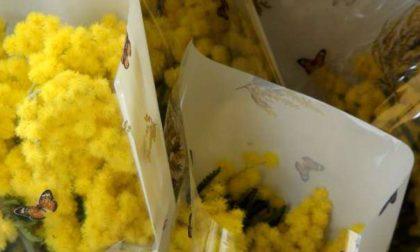 Mercato dello stadio: gli ambulanti non alimentari (a banchi chiusi) regalano mimose
