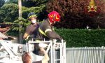 Pappagallo fugge ad Almè, lo recuperano i vigili del fuoco