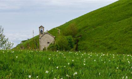 Il meraviglioso tappeto di narcisi sul sentiero che porta alla vetta del monte Linzone