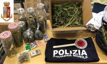 Aveva allestito a Valtesse una serra per coltivare la marijuana. Denunciato 26enne