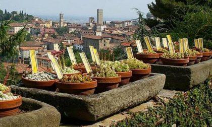 Bergamo vince un bando europeo per le politiche sul cibo