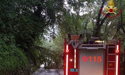 Nembro, albero cade sulla strada per Selvino. Sul posto i vigili del fuoco