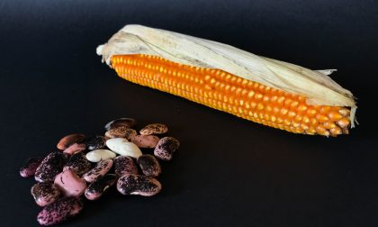 Fagiolo di Clüsven e Mais Spinato: vengono dal passato i segreti per il cibo del futuro