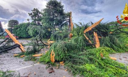 Fulmine colpisce un albero di 20 metri: la pianta esplode