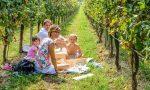 Agriturismo, dal picnic in vigna al menù digitale: le idee contadine