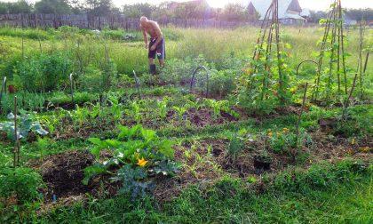L'assessore dimezza gli orti e così accontenta anche gli anziani della Celadina