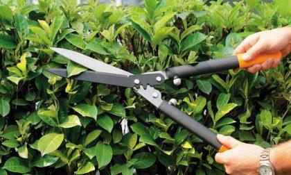 Se tagliate l'erba e dovete buttarla, sappiate che il punto di raccolta in città si sposta