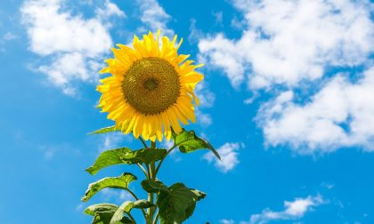 Nel fine settimana il tempo dovrebbe migliorare | Previsioni meteo