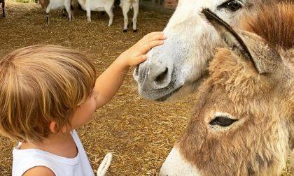 Al via i campi estivi per bambini al Castello di Malpaga, per divertirsi e imparare nella natura