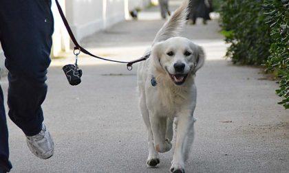 Uomo esce di casa col cane senza mascherina. Insultato e minacciato da una coppia