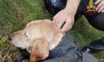 Antegnate, cane scappa e finisce in un canale: salvato dai Vigili del fuoco