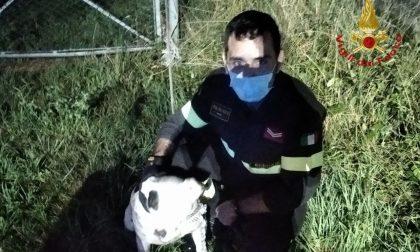 Due cani scappano di casa e finiscono nella roggia a Calcinate: salvati dai vigili del fuoco