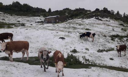 Forte grandinata in Val Brembana, al Cancervo: stop al pascolo dei bovini