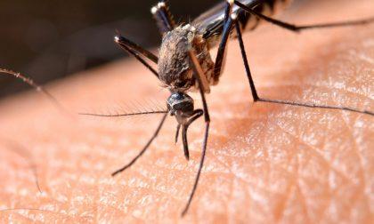 Contrasto alla zanzara tigre: le azioni di Palazzo Frizzoni e gli obblighi per i residenti