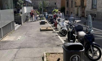 Taglio degli alberi in via Piccinini, l'assessore Marchesi: «Saranno sostituiti in autunno»