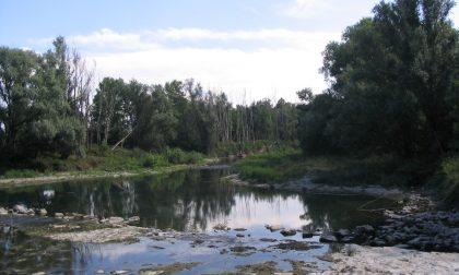 Parco del Serio, dalla Regione oltre 21 mila euro per il contenimento del pesce siluro