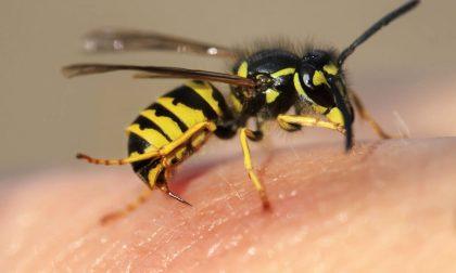 Reazione allergica alle punture di vespa a Mezzoldo: 54enne in ospedale