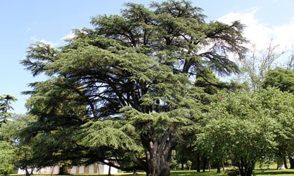Su Google la mappa che geolocalizza gli alberi monumentali della Bergamasca