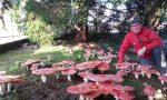 Come nelle fiabe: un tappeto di funghi in Valle Seriana. Lo spettacolo della natura