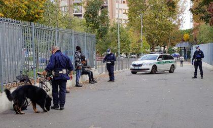 Tenai, primo cane della Polizia Locale di Bergamo, in azione contro lo spaccio