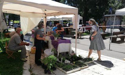 """Al mercato di Monterosso arriva la """"Spesa SOSpesa"""", per aiutare le famiglie del quartiere"""