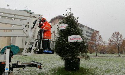 Albero di Natale di quartiere in via Carnovali: tutti possono addobbarlo
