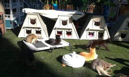 È la fine della colonia di gatti di Ponte San Pietro? «Perseguitati per troppo amore»