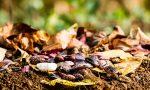 """""""I legumi salveranno il mondo"""": anche in Bergamasca il progetto europeo Increase"""