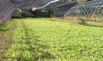 La crisi colpisce il settore agricolo: nel 2020 persi ottanta milioni di euro sulla produzione
