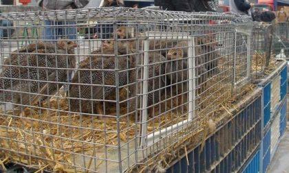 Celadina, il mercato ortofrutticolo resta chiuso ai privati al sabato; riapre quello avicunicolo