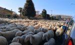 Una domenica bestiale a Carvico: auto in balia delle pecore sulla Provinciale