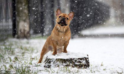 Cosa sappiamo sul mistero dei cani folgorati a Capodanno in Lombardia