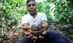 Virtual Charity Challenge, una corsa con Cesvi per piantare alberi in Amazzonia