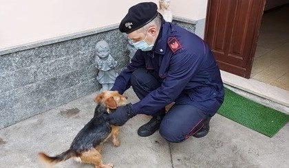Pensionato bergamasco denunciato per aver abbandonato in Piemonte il suo cane ferito