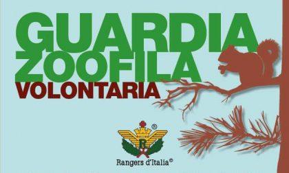 Al via le iscrizioni del corso dei Rangers d'Italia per diventare guardie zoofile volontarie