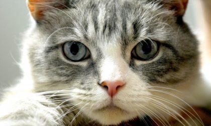 Nella Giornata del Gatto, il Comune di Bergamo lancia un'iniziativa in tutela di gattare e gattari