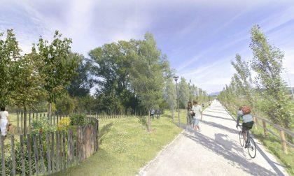 Nel Bosco della Memoria alberi autoctoni ma anche un tiglio donato da Biccari