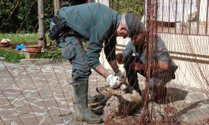 Il bilancio della polizia provinciale: recuperati 650 animali in difficoltà, 140 illeciti accertati