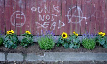 Laboratorio di Guerrilla Gardening (cioè giardinaggio d'assalto) con l'Orto Botanico