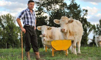 Piano di sviluppo rurale (Psr), in Lombardia assegnato il 98 per cento delle risorse