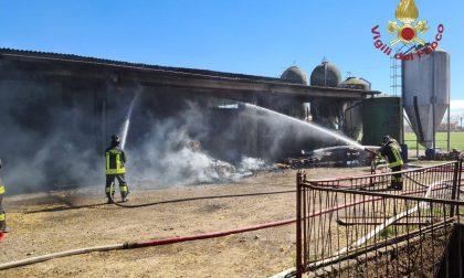 Martinengo, incendio devasta l'azienda agricola dell'ex sindaco. Vigili del fuoco al lavoro
