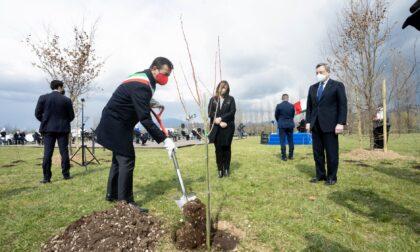Bosco della Memoria, con la campagna di crowdfunding raccolti oltre 126 mila euro