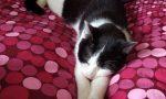 Gattina torturata e uccisa, l'appello di una lettrice: «Aiutateci a trovare i responsabili»